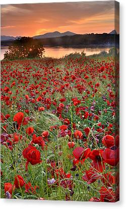 Field Of Poppies Canvas Print by Guido Montanes Castillo