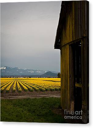 Field Of Spring Canvas Print