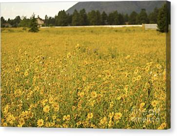 Field Of Yellow Daisy's Canvas Print by Donna Greene