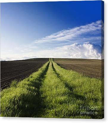 Field Path In Limagne. Auvergne. France. Europe Canvas Print by Bernard Jaubert