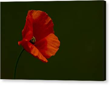 Canvas Print featuring the photograph Field Poppy by Rob Hemphill