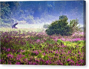 Field With Purple Flowers Canvas Print by Brian Lee