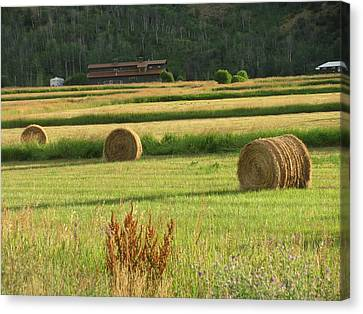 Fields Of Gold Canvas Print by Shawn Hughes