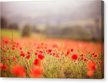 Fields Of Wild Poppies Canvas Print by Olivia Bell Photography