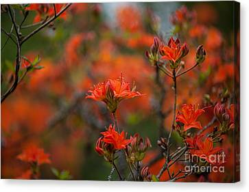 Fiery Spring Canvas Print by Mike Reid