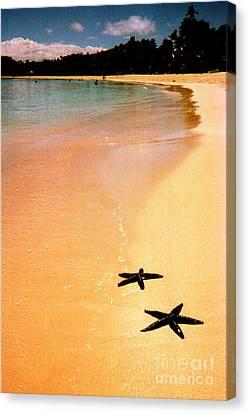 Fiji Beach With Starfish Canvas Print by Jerome Stumphauzer
