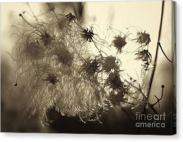 Canvas Print featuring the photograph Filaments by Eunice Gibb
