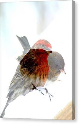 Finch And Junko Canvas Print by Rick Rauzi