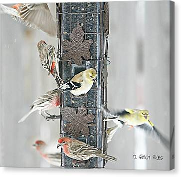 Finches Canvas Print by Debbie Sikes