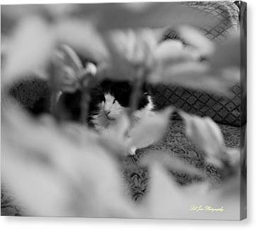 Canvas Print featuring the photograph Find The Kitty by Jeanette C Landstrom