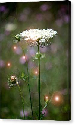 Canvas Print featuring the photograph Fine Lace And Fairies by Penny Hunt