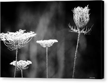 Canvas Print featuring the photograph Fine Lace by Penny Hunt