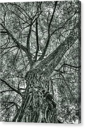Finkles Landing Tree Canvas Print