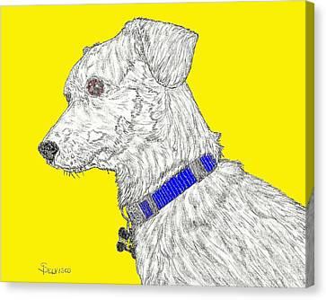 Finn In Color Canvas Print by Salvadore Delvisco