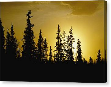 Fir Trees Silhouetted In Early Morning Canvas Print by George F. Mobley