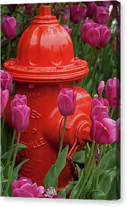 Fire Plug And Tulips Canvas Print by Michael Flood