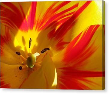 Fire Tulip Canvas Print