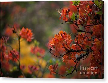 Firestorm Canvas Print by Mike Reid
