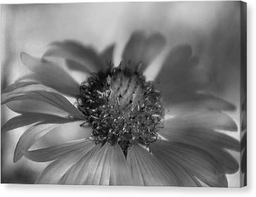 Canvas Print featuring the photograph Firewheel In Mono by Vicki Pelham