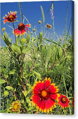 Canvas Print featuring the photograph Firewheels Galour by Lynnette Johns