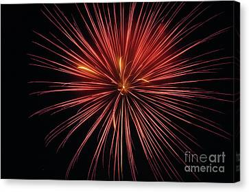 First Glance Canvas Print by Clayton Bruster