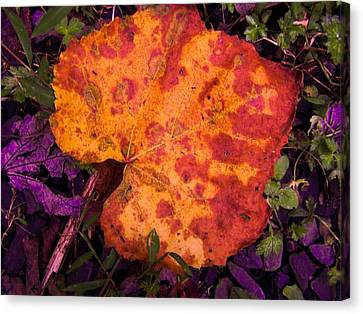 First Sign Of Autumn Canvas Print by Gordon H Rohrbaugh Jr