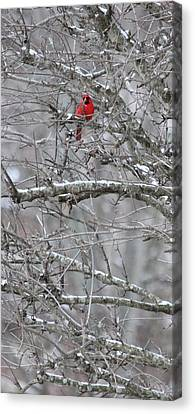 First Snow Fall Canvas Print by Kume Bryant