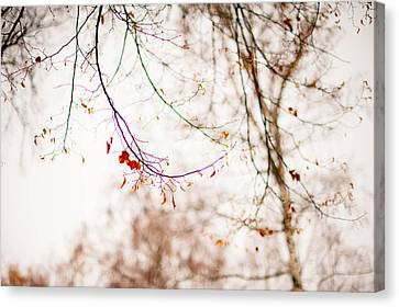 First Snow. Touch Of Gold Canvas Print by Jenny Rainbow