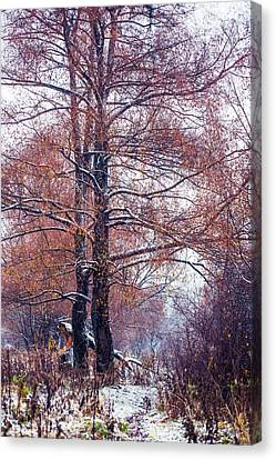 First Snow. Winter Coming Canvas Print by Jenny Rainbow