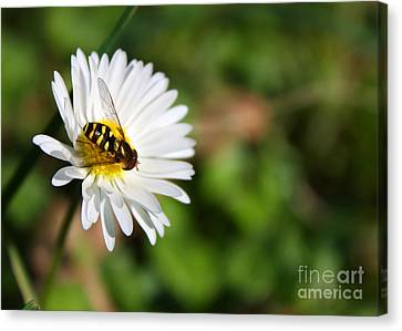 Canvas Print featuring the photograph First Spring Bee by Tyra  OBryant
