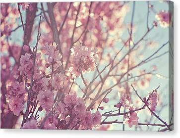First Spring Blossom Canvas Print by Bonita Cooke