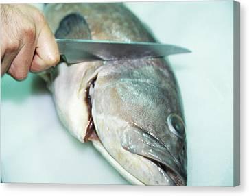 Fish Preparation Canvas Print by Cristina Pedrazzini