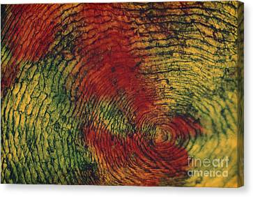 Fish Scale Canvas Print by Eric V. Grave