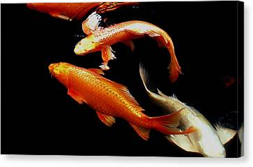 Fish Swimming Canvas Print by Don Mann