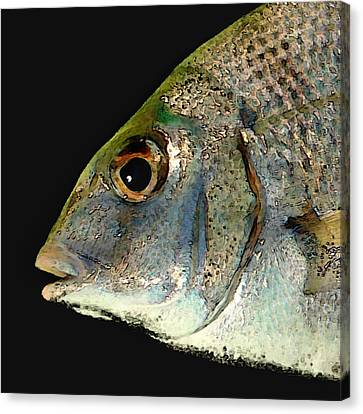 Fisheye Canvas Print by Karen Lynch