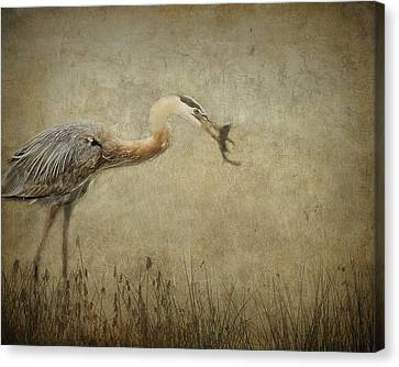 Fishin' Canvas Print by Mario Celzner