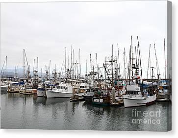 Fishing Boats In Pillar Point Harbor At Half Moon Bay California . 7d8196 Canvas Print by Wingsdomain Art and Photography