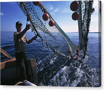 Fishing For Scientific Specimens Canvas Print by Volker Steger