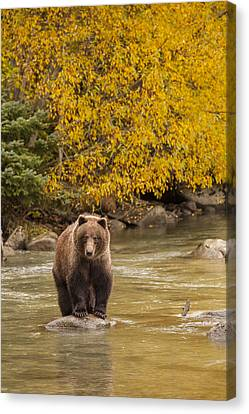 Prints Of Alaska Canvas Print - Fishing In The Fall by Tim Grams