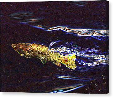 Fishy Fishy In The Brook Canvas Print