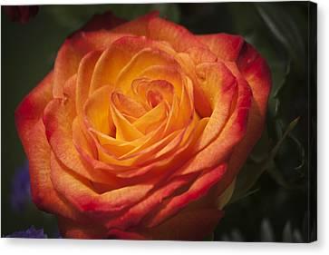 Flame Rose Study 1 Canvas Print by Teresa Mucha