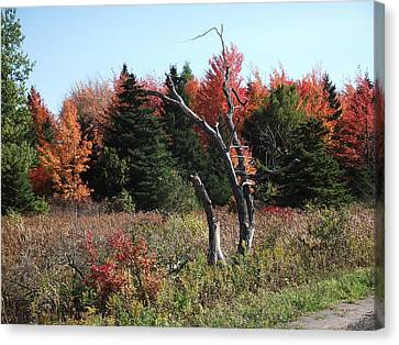 Canvas Print featuring the photograph Flames Of Autumn by Christian Mattison