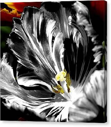 Flaming Flower 2 Canvas Print by James Granberry
