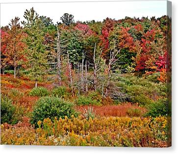 Canvas Print featuring the photograph Flaming Meadow by Christian Mattison