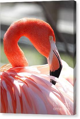 Flamingo Canvas Print by Billie-Jo Miller