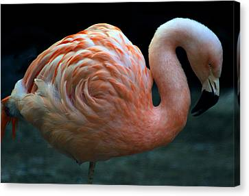 Canvas Print featuring the photograph Flamingo by Tammy Espino