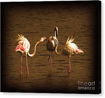 Flamingos Argue Canvas Print by Radoslav Nedelchev
