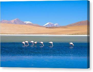 Flamingos At Lake Canvas Print by Werner Büchel
