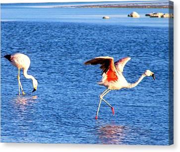 Flamingos Flamencos Canvas Print by Sandra Lira