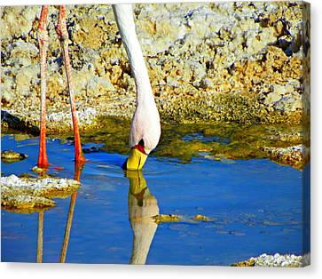 Flamingos In The Atacama Desert Canvas Print by Sandra Lira